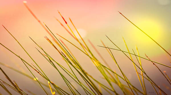 Photograph - Dreaming In The Grass by Bob Orsillo
