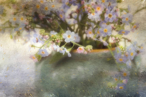 Photograph - Dreaming Of Forget-me-nots by Peggy Collins