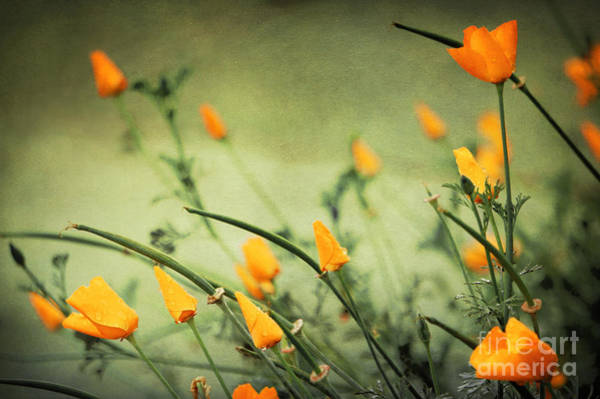 Photograph - Dreaming Of Spring by Ellen Cotton
