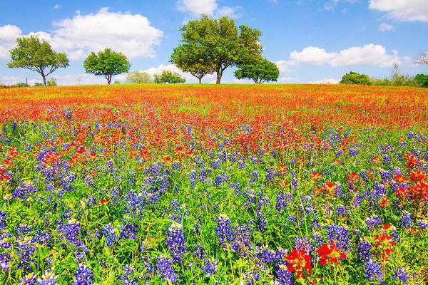 Texas Bluebonnet Photograph - Dreaming Of Wildflowers by Ellie Teramoto