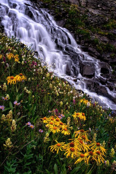 Silverton Photograph - Dreams Of A Wildflower Summer by Mike Berenson