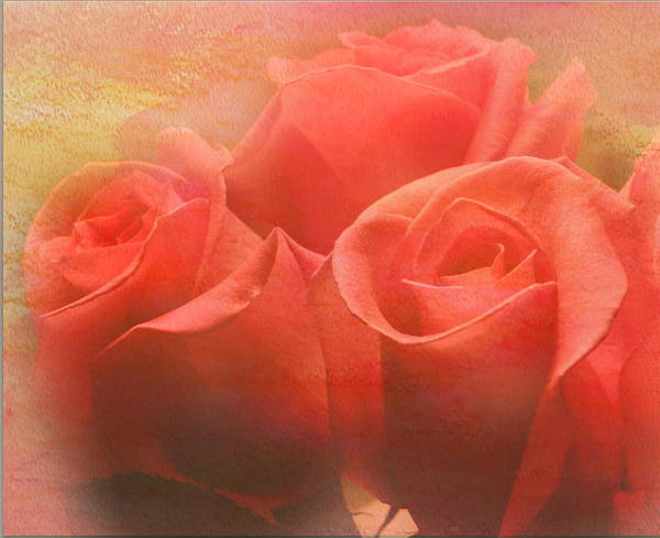 Photograph - Dreams Of Roses by Grace Dillon