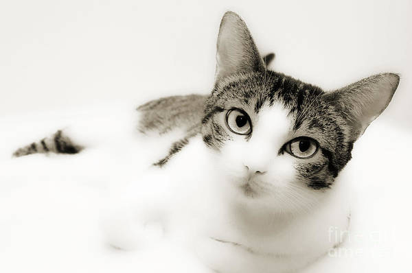 Photograph - Dreamy Cat 2 by Andee Design