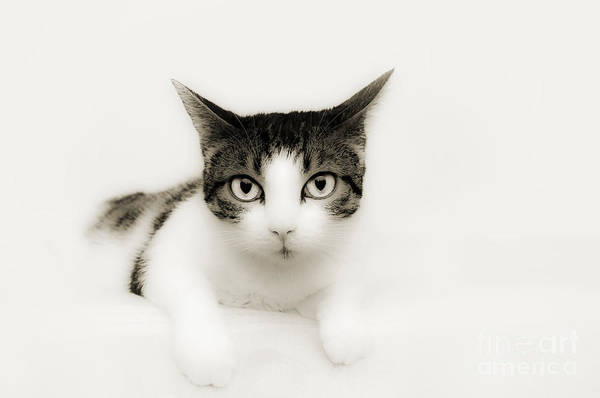 Photograph - Dreamy Cat by Andee Design