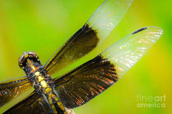 Photograph - Dreamy Dragonfly by Cheryl McClure