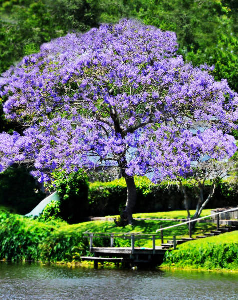 Dreamy Jacaranda On Lake Art Print