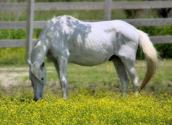 Photograph - Dreamy Pony by Mary Almond
