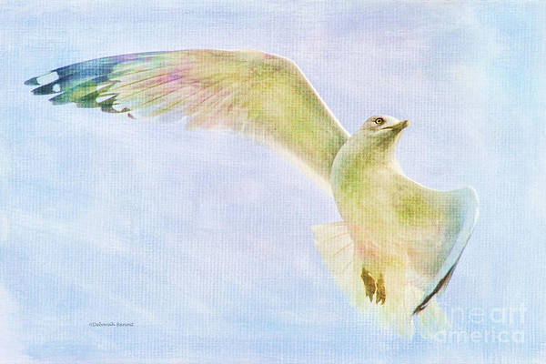 Photograph - Dreamy Soft Seagull by Deborah Benoit