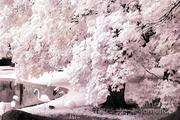Infrared Photograph - Dreamy Surreal Pink White Infrared Pink Flamingos In Pond - Pink Flamingos Dreamy Nature Landscape by Kathy Fornal