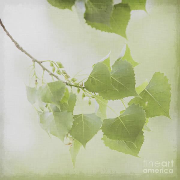 Wall Art - Photograph - Dreamy Tree Branch  by Lucid Mood