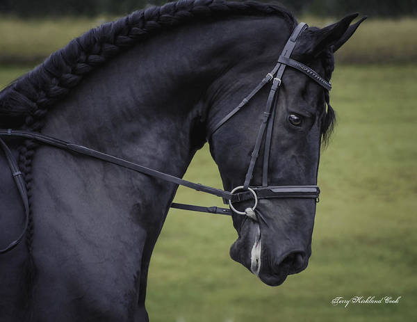 Photograph - Dressage One by Terry Kirkland Cook