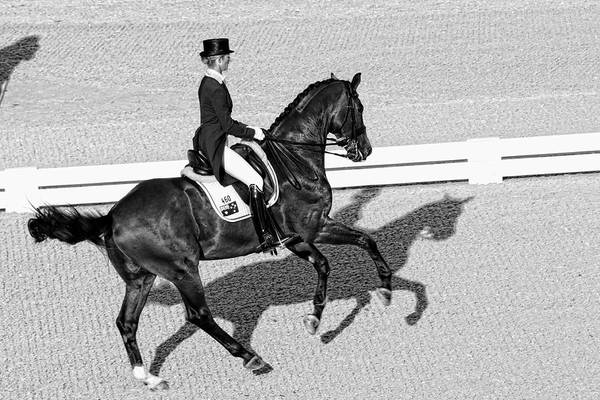 Wall Art - Photograph - Dressage Une Noir by Alice Gipson