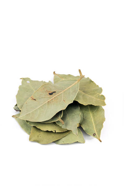 Wall Art - Photograph - Dried Bay Leaf by Geoff Kidd/science Photo Library