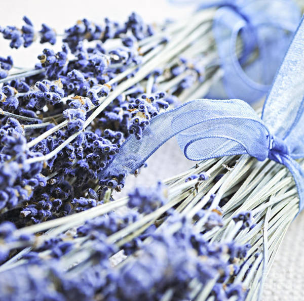 Photograph - Dried Lavender by Elena Elisseeva