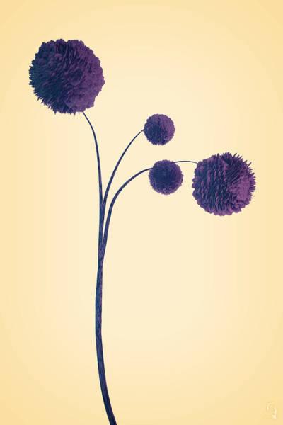 Digital Art - Dried Plant 1 Of 4 by Matt Lindley