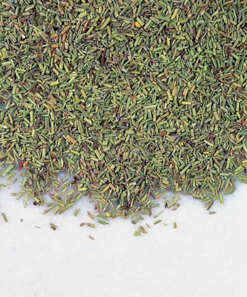 Wall Art - Photograph - Dried Rosemary by Geoff Kidd/science Photo Library