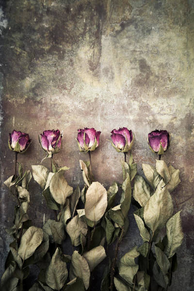 Photograph - Dried Roses by Maria Heyens