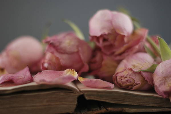 Wall Art - Photograph - Dried Roses by Shawna Lemay