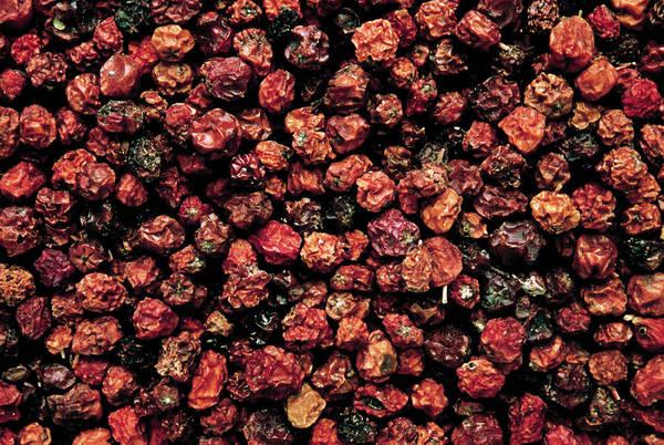 Rowan Photograph - Dried Rowan Berries by Th Foto-werbung/science Photo Library