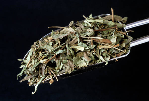 Herbs Photograph - Dried Tarragon by Th Foto-werbung/science Photo Library
