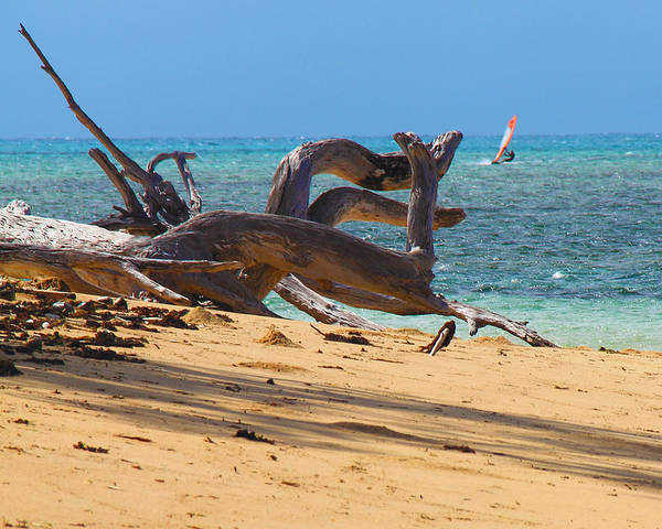 Art Print featuring the photograph Drift Wood by Debbie Cundy