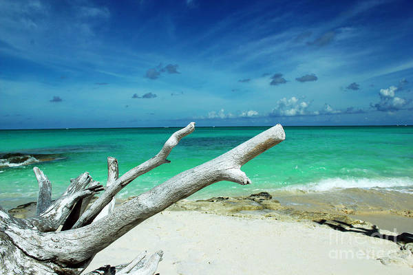 Photograph - Drift Wood In The Caribbean by Robyn Saunders