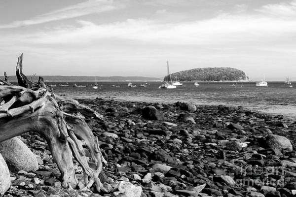 Photograph - Driftwood And Harbor by Jemmy Archer