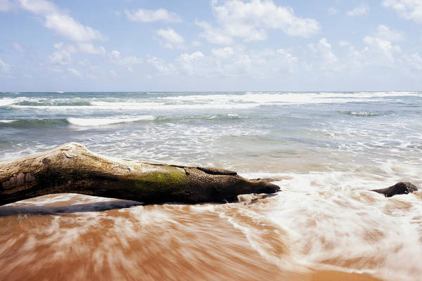 Wall Art - Photograph - Driftwood And Rocks At Lydgate Beach by Ian Ludwig