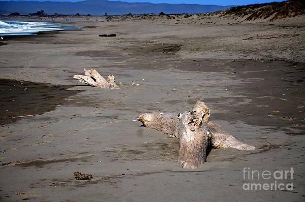 Photograph - Driftwood Posing On A Monterey Bay Beach by Susan Wiedmann