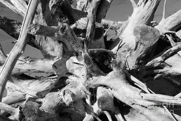 Timeworn Photograph - Driftwood by Barbara Bardzik
