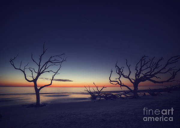 Driftwood Beach 2 Art Print