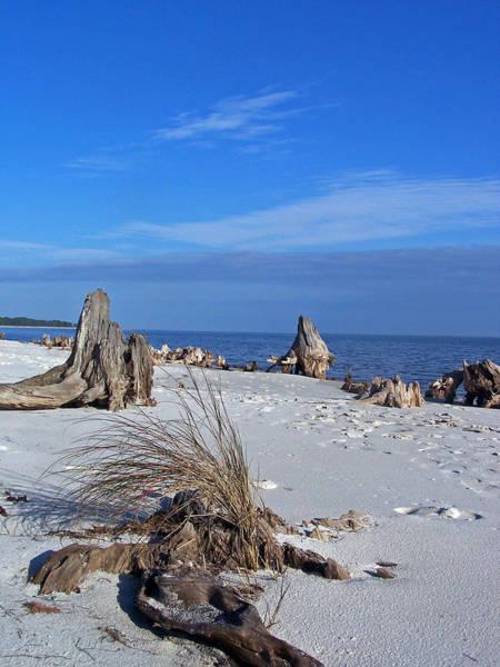 Photograph - Driftwood Beach by Jennifer Robin