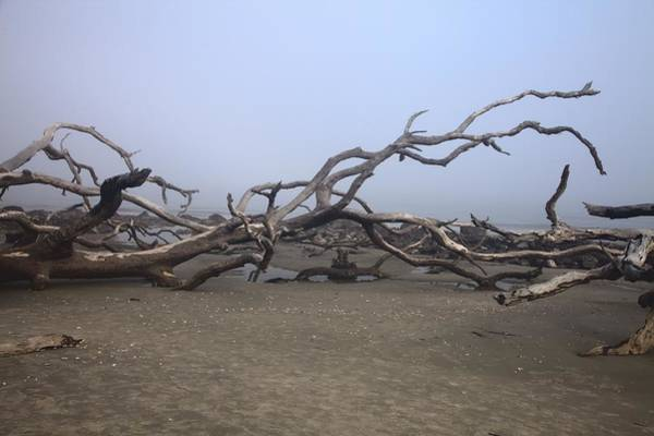 Photograph - Driftwood Beach On Jekyll Island by Gordon Elwell