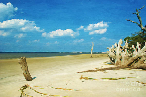 Jekyll Island Photograph - Driftwood Beach by Laura D Young