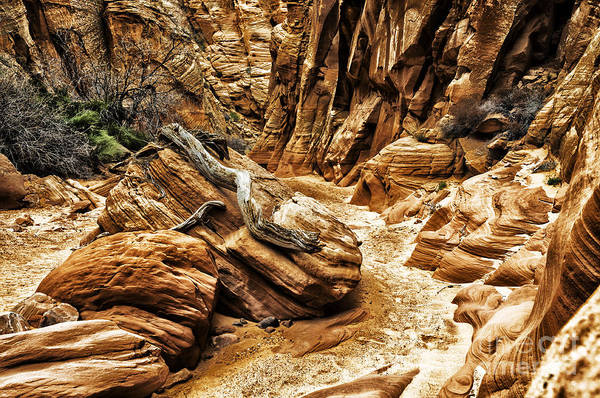 Photograph - Driftwood Canyon X by Thomas R Fletcher