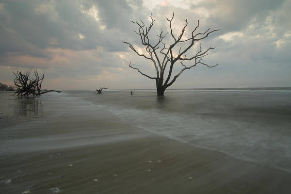 Photograph - Driftwood Dawn by Doug McPherson