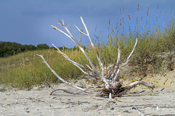 Driftwood Photograph - Driftwood by Betsy Knapp