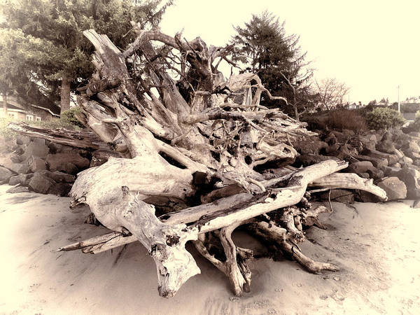 Photograph - Driftwood Frenzy by HW Kateley