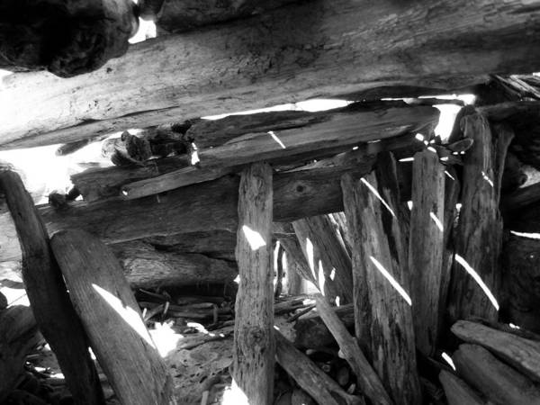 Photograph - Driftwood Hut by Tarey Potter