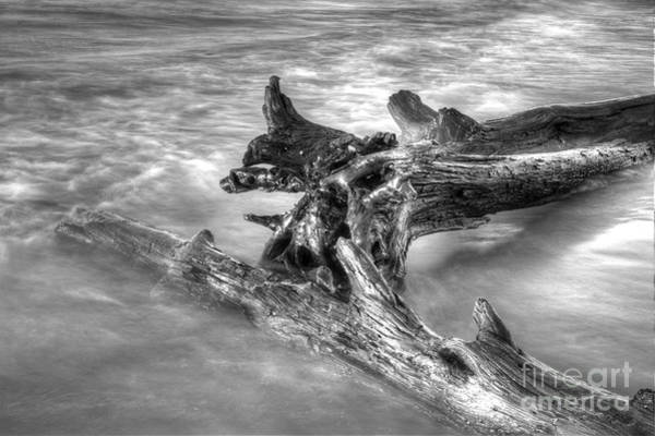 Lake Superior Photograph - Driftwood In Lake Superior by Twenty Two North Photography