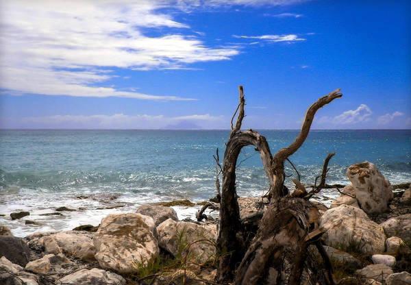 Wall Art - Photograph - Driftwood Island by Karen Wiles