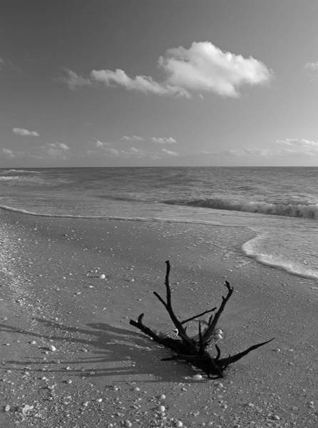 Photograph - Driftwood by Juergen Roth