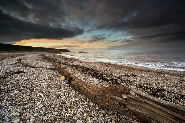 Sunderland Wall Art - Photograph - Driftwood Laying On The Gravel Beach by John Short / Design Pics
