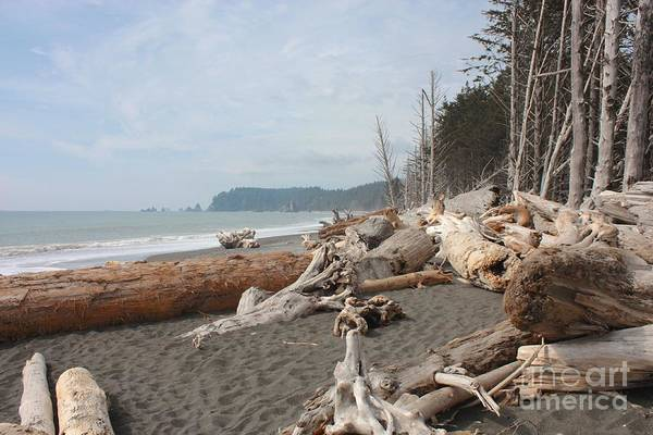 Photograph - Driftwood On La Push Beach by Carol Groenen