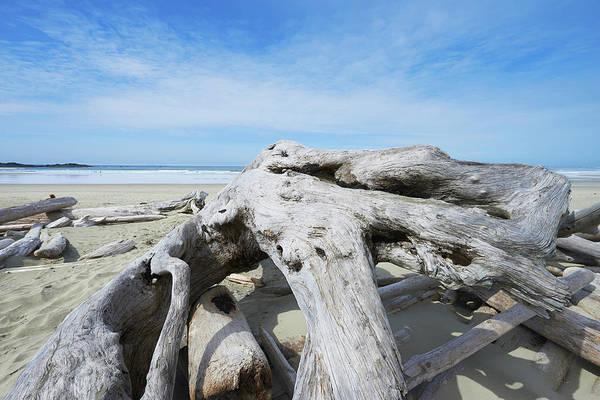 Vancouver Island Photograph - Driftwood On Wickininish Beach by Ian Crysler / Design Pics