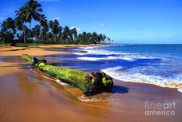 Photograph - Driftwood Sea Palms by Thomas R Fletcher