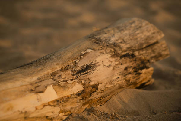 Photograph - Driftwood by Sebastian Musial