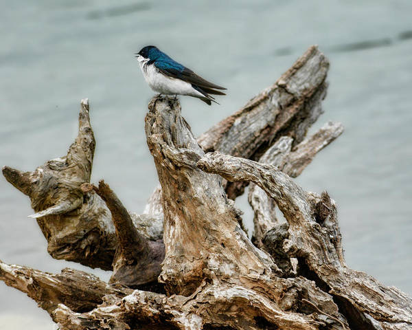 Photograph - Driftwood Song by Jai Johnson