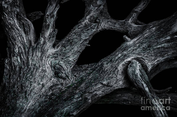 Photograph - Driftwood Study 1 by Michael Arend