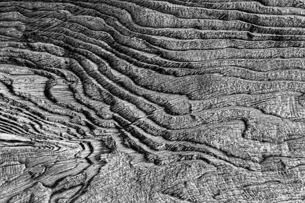 Photograph - Driftwood by Wes and Dotty Weber